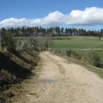 Chemin débroussaillé